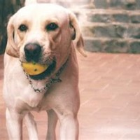 Best Puppy Chew Toys For Labs